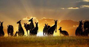traveling Australia